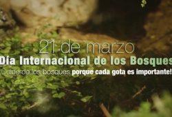 dia_int_bosques_1